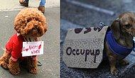 19 Dogs Who Protest Harder Than You!