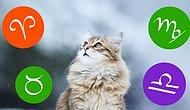Тест: Узнай, какая порода кошек подходит тебе по знаку Зодиака
