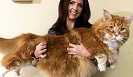 Встречайте Омара — самого-самого длинного кота на Земле!