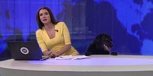 Собака в прямом эфире 😂