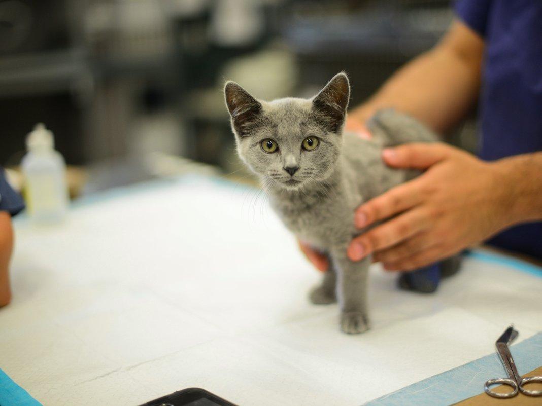 veterinary assistants and laboratory animal caretakers