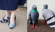Курлык-курлык: туфли в виде голубей покорили интернет, и мы расскажем, как их сделать