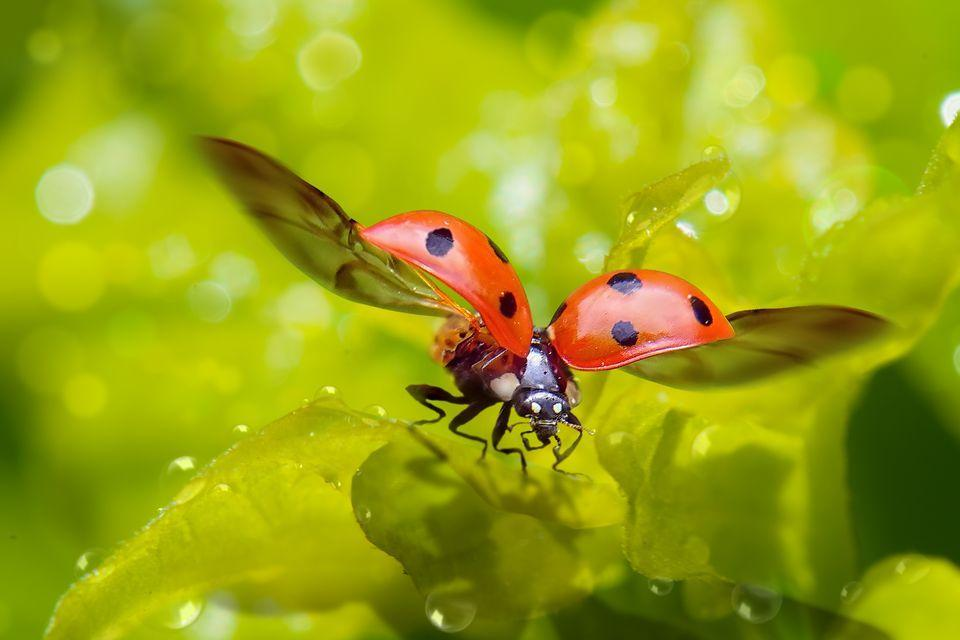 researchers start to work ladybug wings that can revolutionize