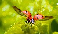 Researchers Start To Work Ladybug Wings That Can Revolutionize Aircraft Designs!