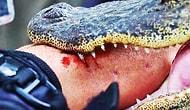В Зимбабве аллигаторы съели профессионального охотника