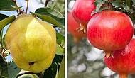 Только настоящий фруктовый эксперт сможет набрать 8/8 в этом тесте