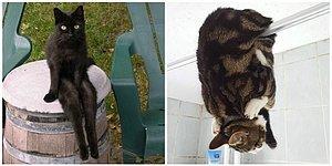 20 фото, где коты - не коты