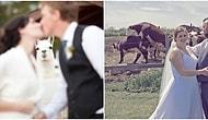 16 неудавшихся свадебных фото, которые точно заставят вас смеяться