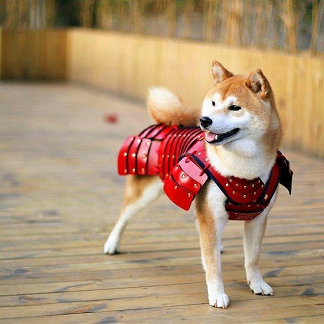 Samurai Age isimli bu Japon firması kedi ve köpek dostlarını asla yanından ayrılmayan, koruyucu birer savaşçı olarak görenler için süper bir ürün tasarladı.