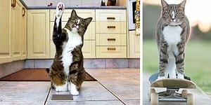 """Книга рекордов Гиннесса вручила этой кошке звание """"Самая умная кошка в мире"""""""