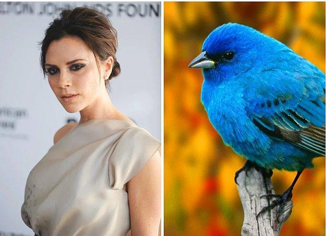 13. Biraz hızlı bir giriş yapalım: Victoria Beckham'ın güzelliğini kuş bokundan aldığını biliyor muydunuz?
