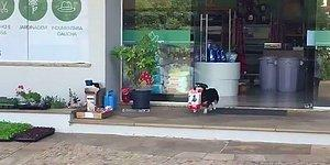 Этот бразильский пес каждый день самостоятельно ходит за покупками!