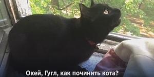 Котики, познавшие дзен