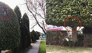 Веселые фото будней садовника стали невероятно популярны в Сети