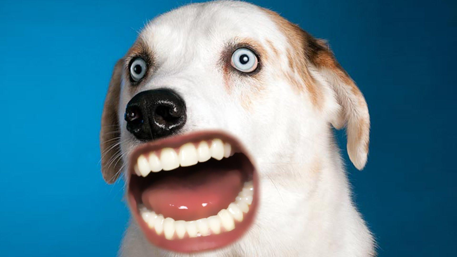 funny dog faces - 1280×720