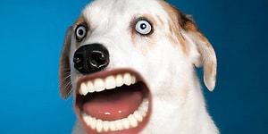 Что было бы, если бы у животных был человеческий рот? 😂