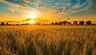 День летнего солнцестояния на Руси: традиции и приметы