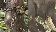 50 лет рабства: в Индии освободили слона, просидевшего на цепи полвека
