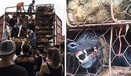 Мужчина преградил путь грузовику с 1000 собаками, которых везли на бойню