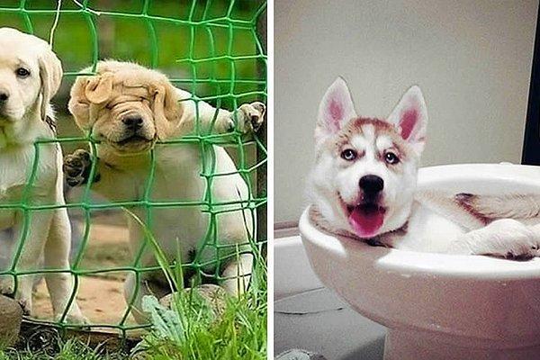 22 собачьих фейла, над которыми и смеяться-то как-то стыдно