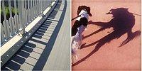 Игра теней: 18 фантастических фото, на которые нужно смотреть как минимум дважды