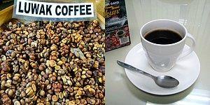 Вы точно не захотите отведать самый дорогой в мире кофе, когда узнаете, из чего его делают