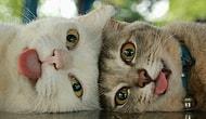 Тест: если бы вы были котом, то каким? 😸