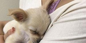 История щенка, оставленного в аэропорту с душераздирающей запиской, заставит вас плакать