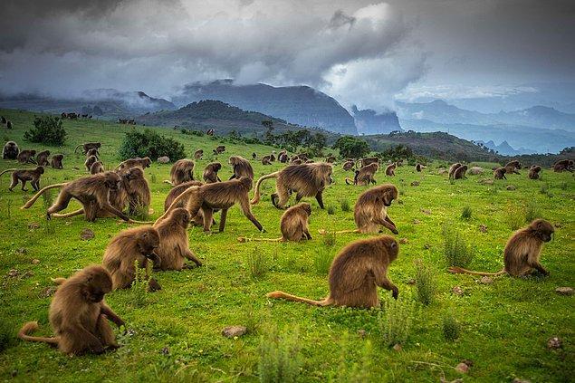 18. Simien Dağları, Etiyopya