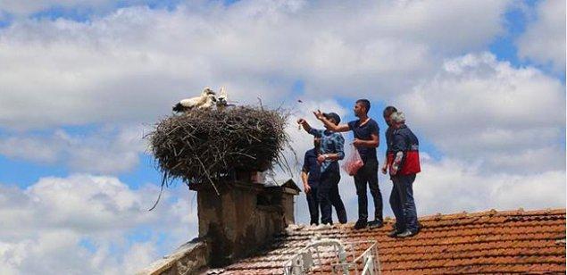 2. Anneleri ölen yavru leylekleri sahiplenen Kastamonu Ağlı Belediyesi'ne de bir alkış alalım 👏