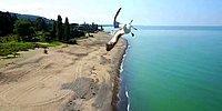 Вот что делает чайка, когда на нее летит дрон