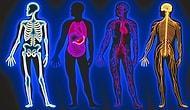 Тест на знание человеческого тела: способны ли вы ответить на все вопросы правильно?