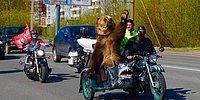 В России возможно все - даже медведи, разъезжающие на мотоциклах