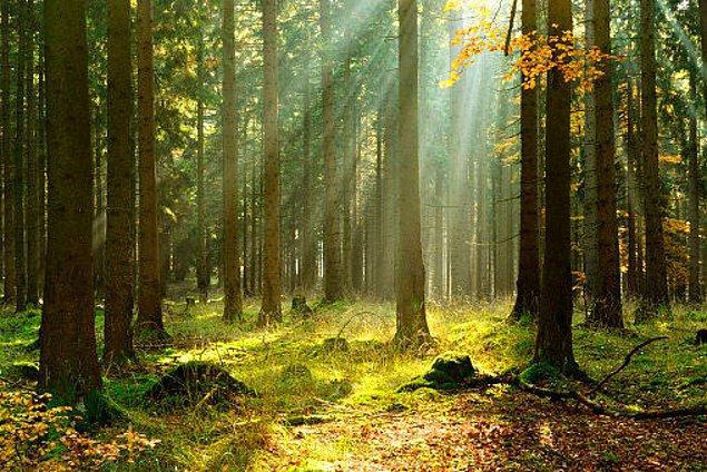 16. Ormanlık alanlar