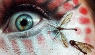 Если не сможете досмотреть эти фото до конца, у вас инсектофобия