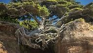 15 нереально крутых деревьев, которым плевать на обстоятельства
