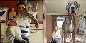 11 фото гигантских животных: кто реален, а кто фейк?