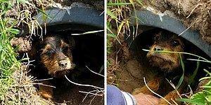 Пара заметила шевеление в канаве и нашла там щенка со сломанными лапами