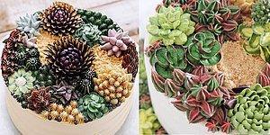 Самые аппетитные кактусы на свете, сделанные из айсинга!