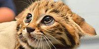 Сможете ли вы угадать животное только по глазу?