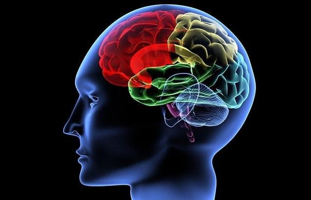 Улучшится мозговая активность