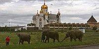 Сделано в России: 23 умопомрачительных фото
