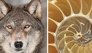 Тест: Выберите природные узоры, а мы скажем, каким животным вы могли бы быть