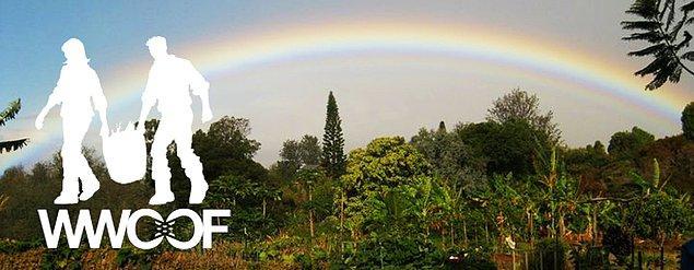 Peki WWOOF nedir? World Wide Opportunities On Organic Farms.