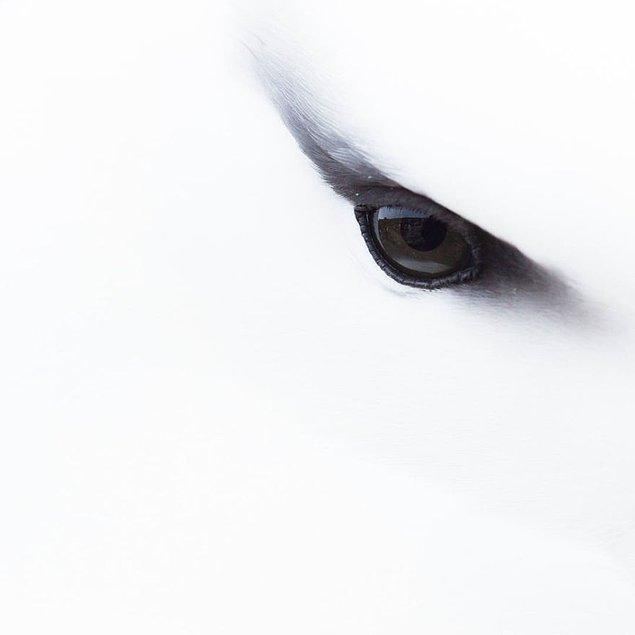 8. Albatross Eye Close-up (Yakından Albatros Gözü) - Jessica Winter, Detaya Verilen Dikkat Kategorisi: Bronz