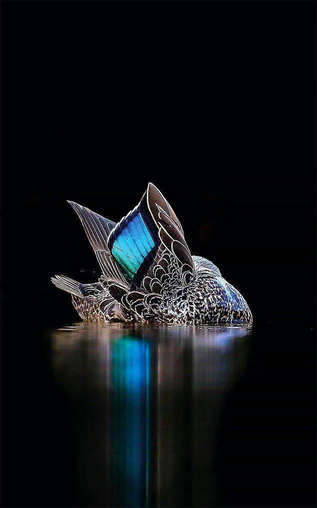 11. The Speculum (Spekülum) - Georgina Steytler, Avustralya, Yaratıcı İmgeler Kategorisinde Altın Ödül Kazananı