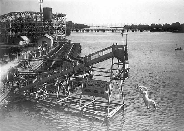 10. Kanada'nın Toronto şehrindeki Hanlan's Point Lunaparkında da atlı dalış popüler bir eğlenceydi, 1907.