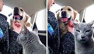 20 жутко забавных фото о том, что случается, когда коты и собаки живут в одном доме