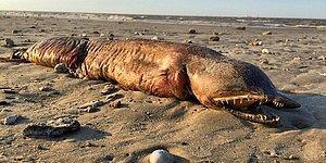 На техасском пляже обнаружили труп загадочного морского обитателя