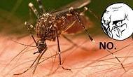 10 самых раздражающих насекомых, которых сразу хочется убить!
